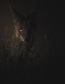 wolf in the shadows social media strategy
