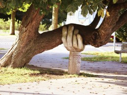 Tree been held up by a support